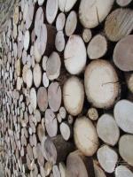 Holzwand mit runde Baumscheiben