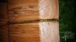 Zwischen dem Holz ist Moos