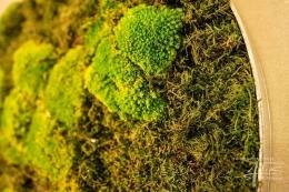 Wald-Bollmoos-Detail