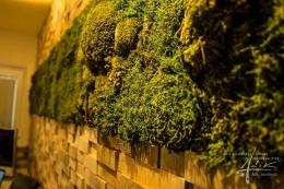Wald-Bollmoos-Wand