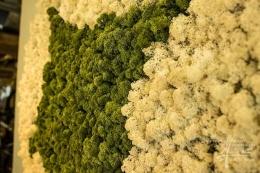 weißes + grünes Islandmoos