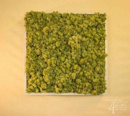 Ein quadratisches grünes Moosbild