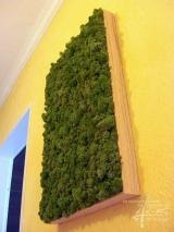 Moosbild Islandmoos Mittelgrün