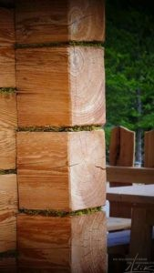 Moos und Holz